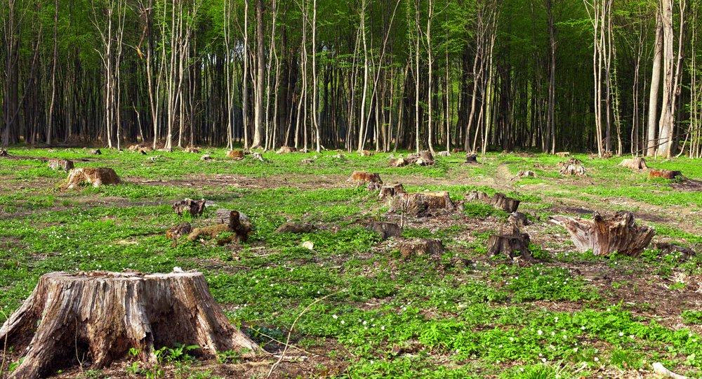 Deforestacion---Ecologia