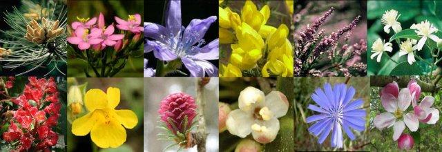 terpia-floral
